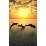 """Sisustusfoto """"Delfiinid"""""""