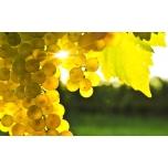 """Sisustusfoto """"Viinamarjad"""""""